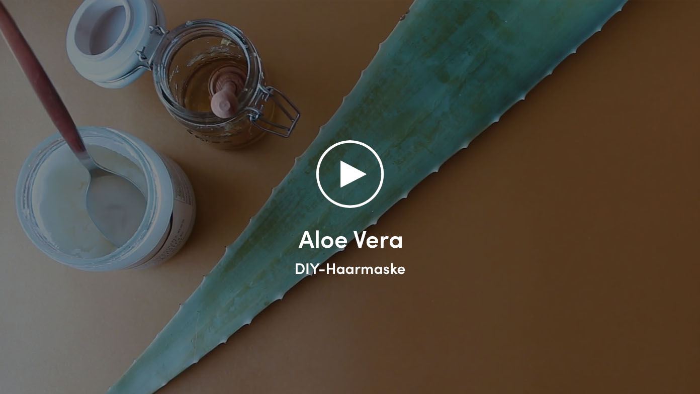 Video über Aloe Vera